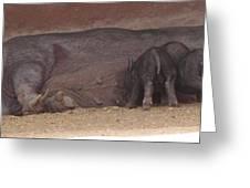 Wild Boar Family Greeting Card