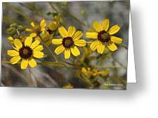 Wild Brittle Bush Flowers Greeting Card