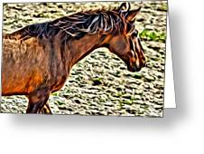 Wild Bronc Greeting Card