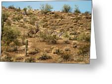 Wild Burros Greeting Card