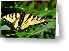Wild Butterfly Greeting Card