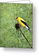 Wild Canary Bird Closeup Greeting Card