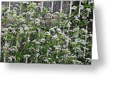 Wild Caraway And Old Fence Greeting Card
