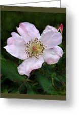 Wild Carolina Rose Greeting Card