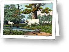 Wild Cattle Of Britain Greeting Card