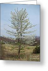 Wild Cherry Tree In Spring Bloom Greeting Card