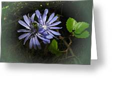 Wild Chickweed 2013 Greeting Card