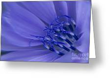 Wild Chicory Macro Greeting Card