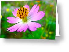 Wild Cosmos Flower Greeting Card