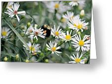 Wild Daisies And The Bumblebee Greeting Card