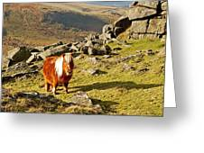 Wild Dartmoor Pony Greeting Card