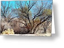 Wild Desert  Greeting Card