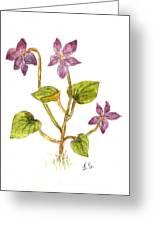 Wild Dog Violet Greeting Card