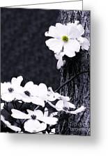Wild Dogwood Blooms Greeting Card
