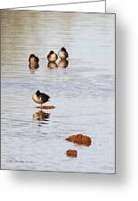 Wild Ducks At Grp Greeting Card