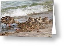 Wild Ducks Greeting Card