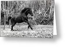 Wild Greeting Card