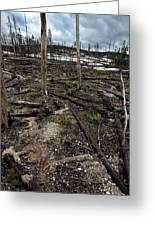 Wild Fire Aftermath Greeting Card
