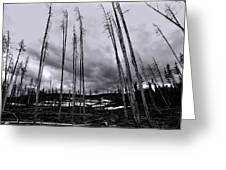 Wild Fire Aftermath In Black And White Greeting Card