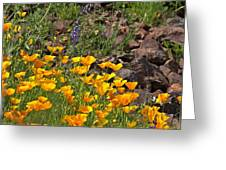 Wild Flower And Rocks Greeting Card