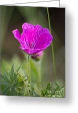 Wild Flower Bloody Geranium Greeting Card