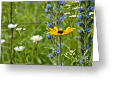 Wild Flower Delight Greeting Card