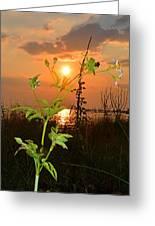 Wild Flower Ia Mlo Greeting Card