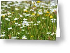 Wild Flower Meadow Greeting Card