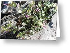 Wild Flowers 1 Greeting Card