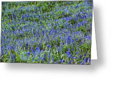 Wild Flowers Blanket Greeting Card
