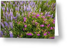 Wild Flowers Display Greeting Card