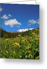 Wild Flowers In Rocky Mountain National Park Greeting Card