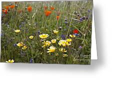 Wild Flowers Russian Ridge Greeting Card