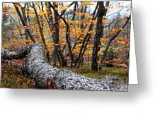 Wild Forest Greeting Card