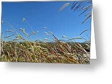 Wild Foxtail Grass In The Breeze II Greeting Card