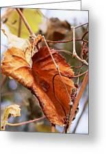 Wild Grapevine Leaf Greeting Card