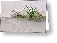 Wild Grass With Deep Roots 8x10 Greeting Card by Michael Flood