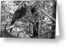 Wild Hawaiian Parrot Black And White Greeting Card