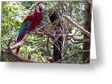 Wild Hawaiian Parrot  Greeting Card