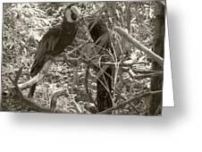 Wild Hawaiian Parrot Sepia Greeting Card