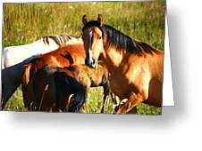 Wild Horse At Lunch Greeting Card