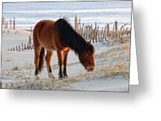 Wild Horse At Sunrise Greeting Card
