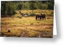 Wild Horse Band In Kananaskis Country Greeting Card