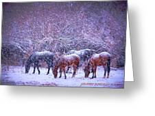 Wild Horse Christams Greeting Card by Jeanne  Bencich-Nations