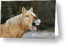Wild Horse Chuckle Greeting Card