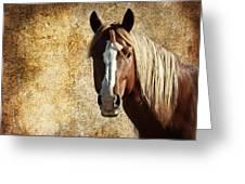 Wild Horse Fade Greeting Card