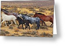 Wild Horse Family Greeting Card