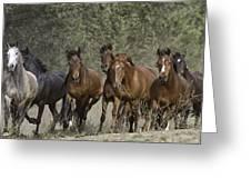 Wild Horse Herd Greeting Card