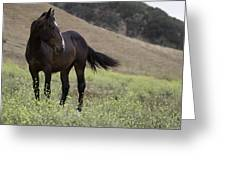 Wild Horse Mare Greeting Card