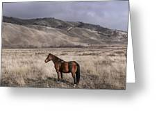Wild Horse Near Fort Tejon State Park Greeting Card
